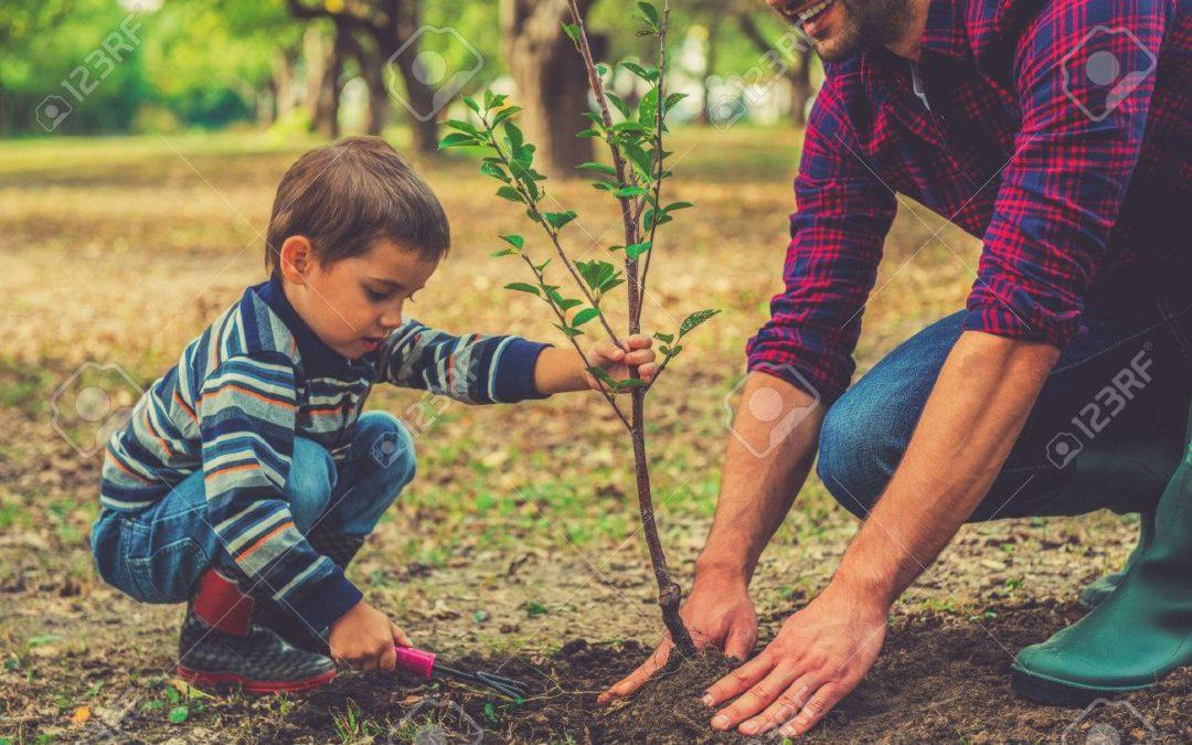 Tree Sale Pickup Dates