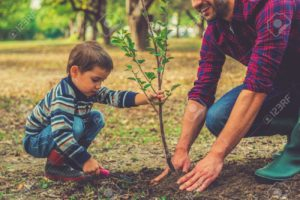 Tree Sale Pickup Dates @ Rockefeller Township Building | Sunbury | Pennsylvania | United States