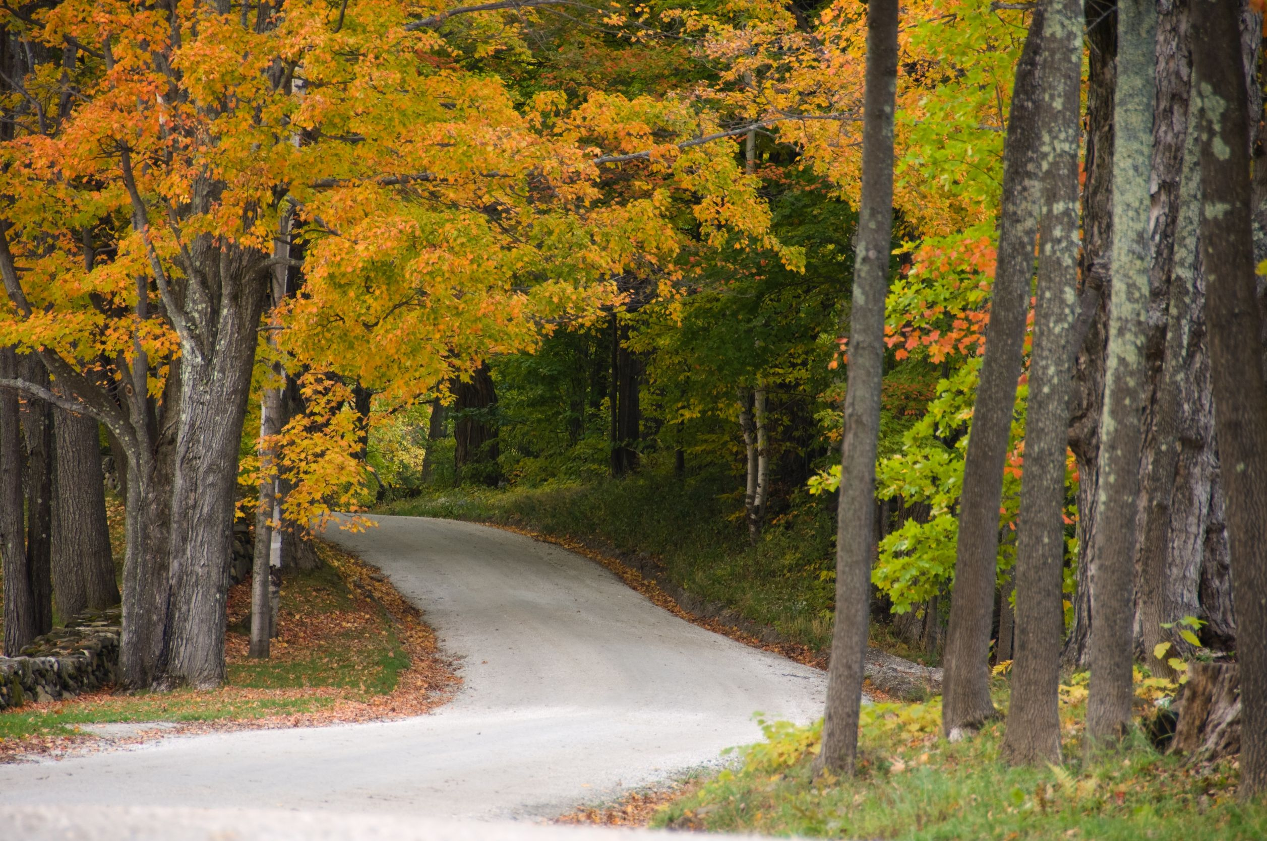 gravel road beneath colorful autumnal trees
