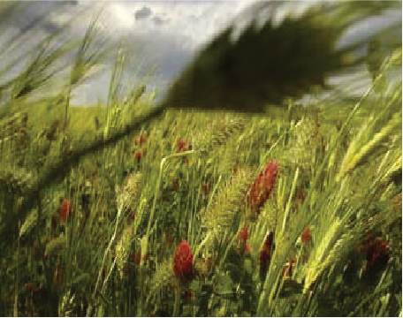 Grant Funding Available – Diverse Species Cover Crop Incentive Program