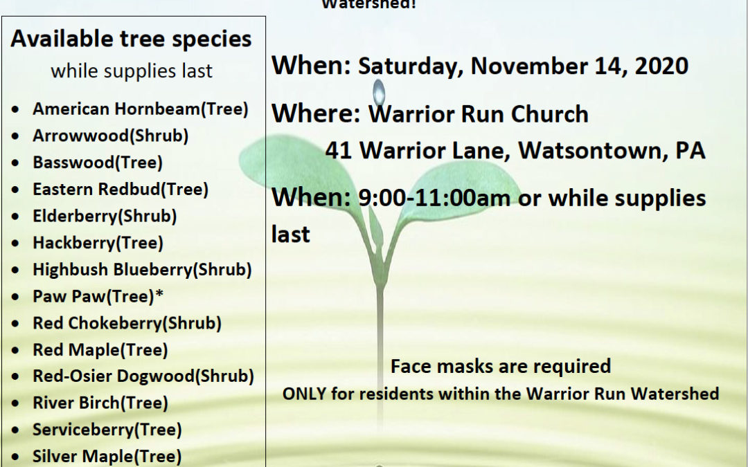 FREE Tree Drive-Thru Event